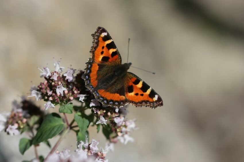 orange black and white butterfly perched on pink flower in close up photography during daytime